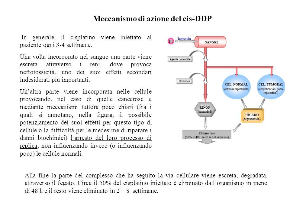 Meccanismo di azione del cis-DDP In generale, il cisplatino viene iniettato al paziente ogni 3-4 settimane. Una volta incorporato nel sangue una parte