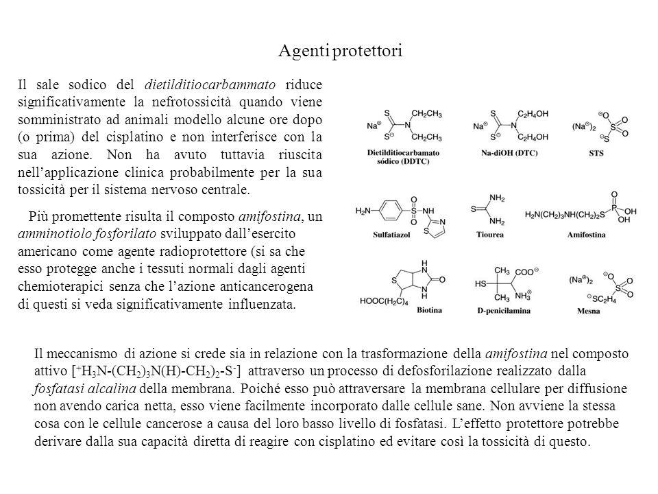 Agenti protettori Il sale sodico del dietilditiocarbammato riduce significativamente la nefrotossicità quando viene somministrato ad animali modello a