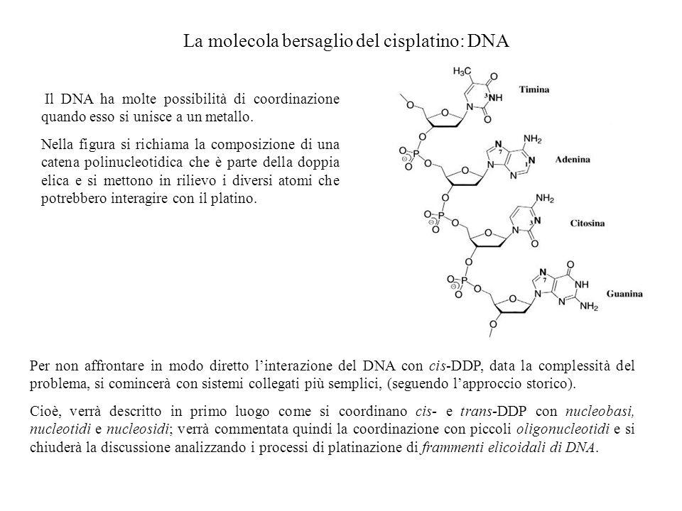 La molecola bersaglio del cisplatino: DNA Il DNA ha molte possibilità di coordinazione quando esso si unisce a un metallo. Nella figura si richiama la