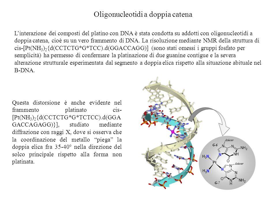 Oligonucleotidi a doppia catena Linterazione dei composti del platino con DNA è stata condotta su addotti con oligonucleotidi a doppia catena, cioè su