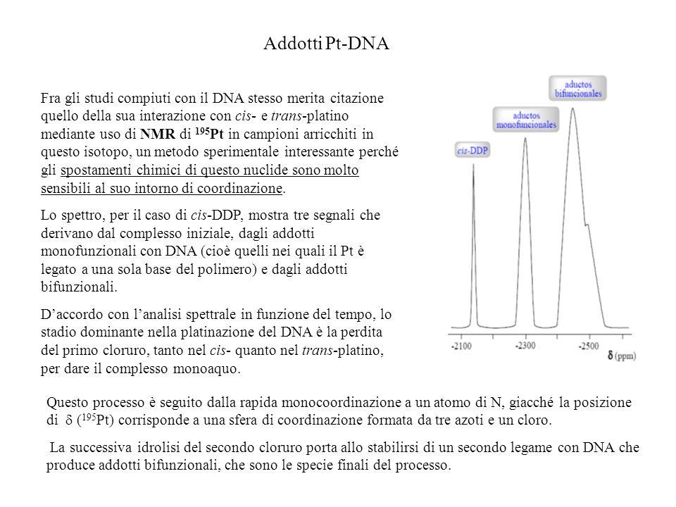 Addotti Pt-DNA Fra gli studi compiuti con il DNA stesso merita citazione quello della sua interazione con cis- e trans-platino mediante uso di NMR di