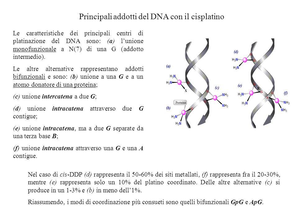 Principali addotti del DNA con il cisplatino Le caratteristiche dei principali centri di platinazione del DNA sono: (a) lunione monofunzionale a N(7)