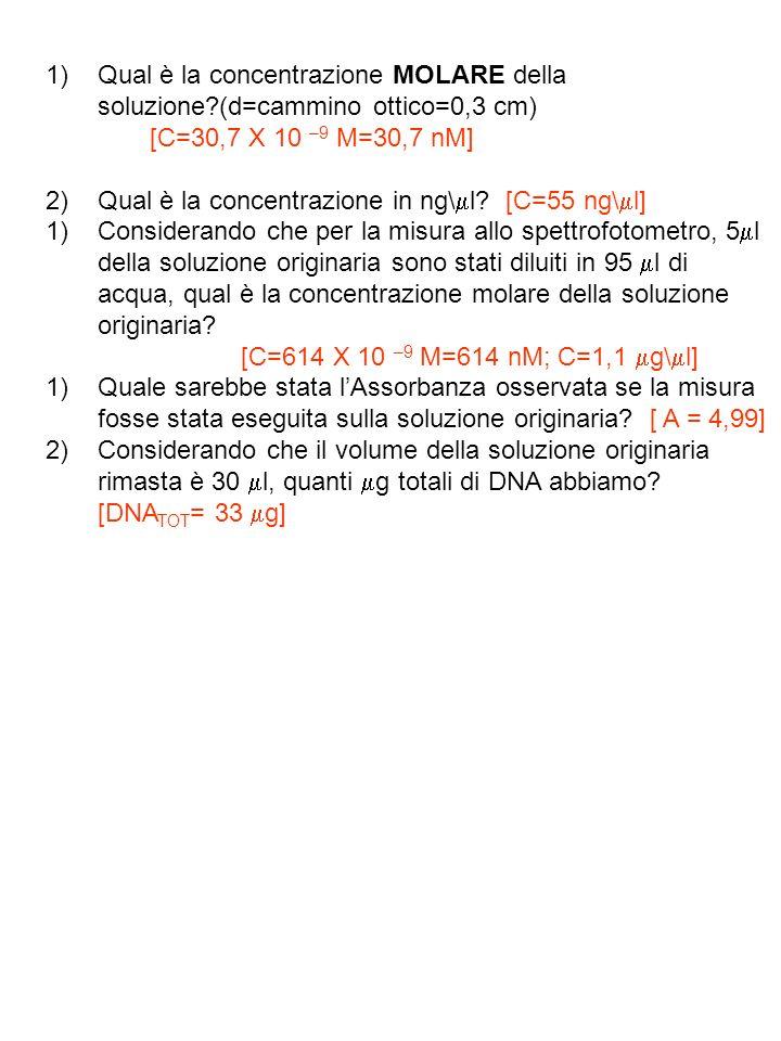ESERCIZIO n°12 Per ottenere un frammento di DNA di 850 bp, esso viene amplificatotramite PCR e gel purificato.