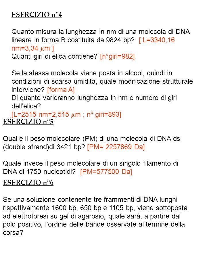 Il peso molecolare di una molecola di DNA a doppio filamento è: PM= 660 x nro bp DA DOVE DERIVA IL VALORE 660.