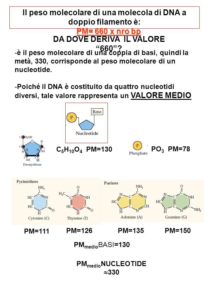 ESERCIZIO n°7 Un plasmide di 3000 bp viene sottoposto ad una serie di restrizioni analitiche che danno i seguenti risultati visualizzati con gel-elettroforesi: Kb EcoRI BamHI EcoRI BamHI 1)Quanti siti di restrizione ha EcoRI.