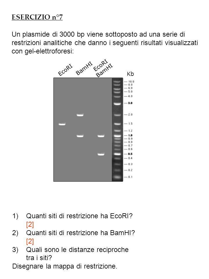 ESERCIZIO n°8 Un plasmide di 6000 bp viene sottoposto ad una serie di restrizioni analitiche che danno i seguenti risultati visualizzati con gel-elettroforesi: Kb PvuIIEcoRI BamHISapI Digestioni singole 1)Quanti siti di restrizione ha PvuII?A quale distanza reciproca.