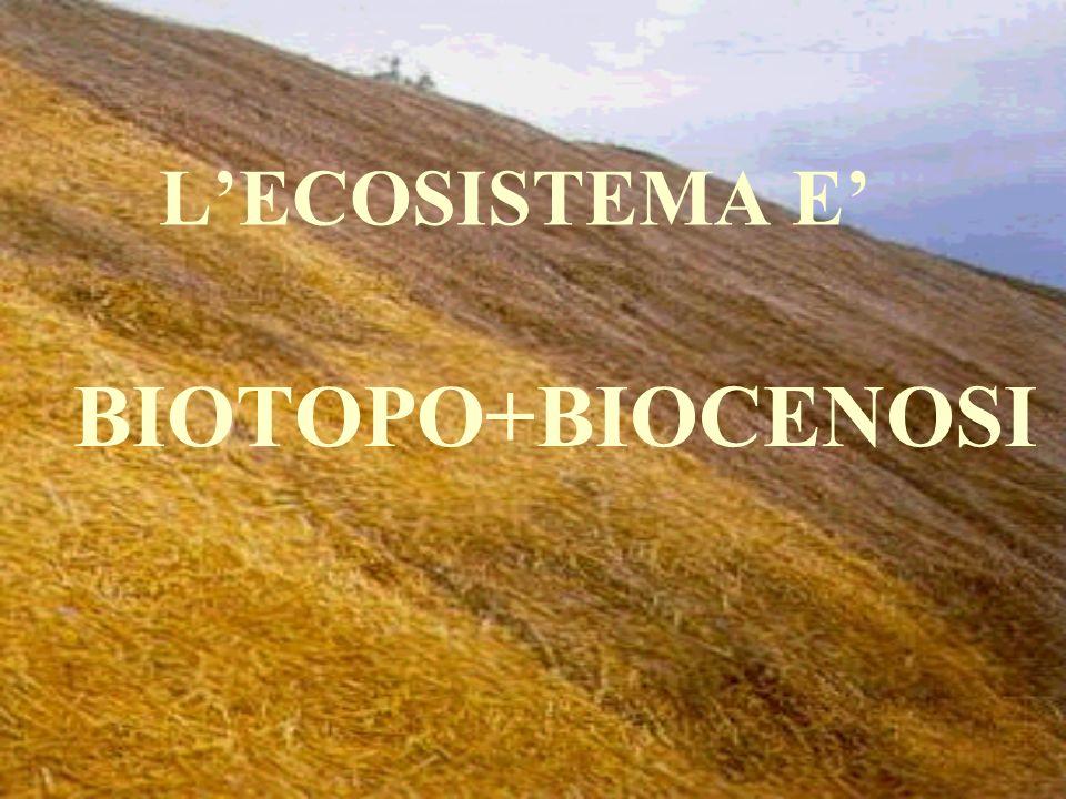 Sentiremo spesso parlare di: BiocenosiBiocenosi BiotopoBiotopo HabitatHabitat Nicchia ecologicaNicchia ecologica è linsieme delle popolazioni viventi nello stesso luogo in un determinato periodo di tempo è lambiente nel quale vive una comunità o biocenosi è la porzione fisica di un ambiente in cui vive una determinata specie animale o vegetale è il ruolo svolto da una specie nella comunità, cioè in modo con cui essa si procura lenergia e i materiali di cui necessita per la propria sopravvivenza