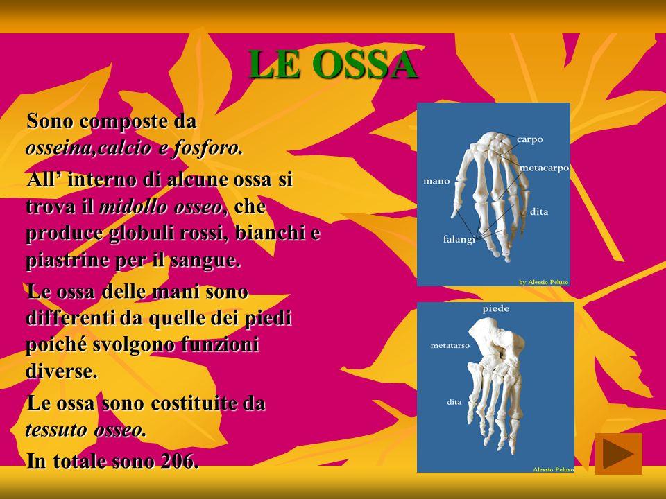 LE FUNZIONI Le principali funzioni dello scheletro sono: Sostenere il peso del corpo Proteggere gli organi interni Dare forma al corpo Permettere il movimento
