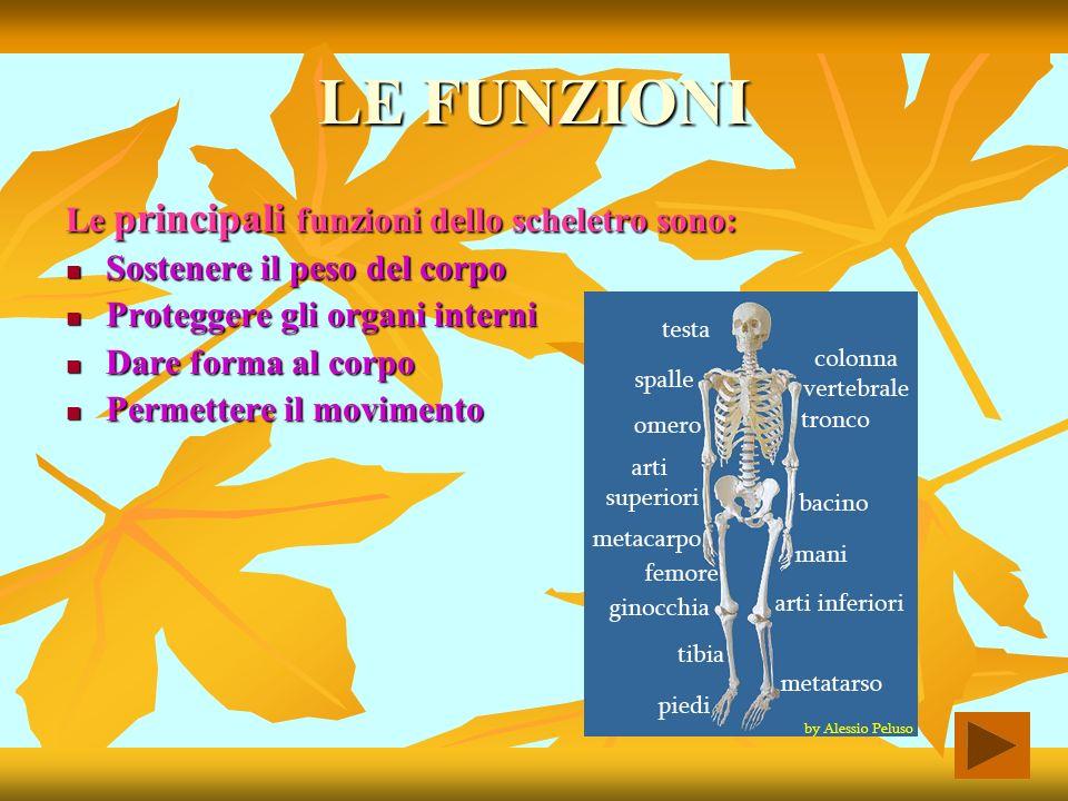 La struttura I principali tipi di scheletri sono : Lo scheletro idrostatico: costituito da un liquido, esso protegge e armotizza gli eventuali urti.