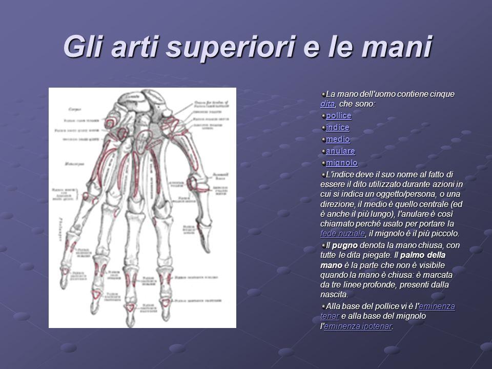 Gli arti superiori e le mani La mano dell'uomo contiene cinque dita, che sono: dita pollice indice medio anulare mignolo L'indice deve il suo nome al