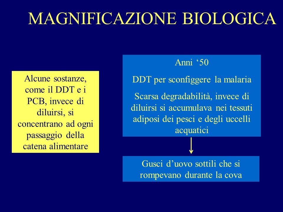 MAGNIFICAZIONE BIOLOGICA Alcune sostanze, come il DDT e i PCB, invece di diluirsi, si concentrano ad ogni passaggio della catena alimentare Anni 50 DD