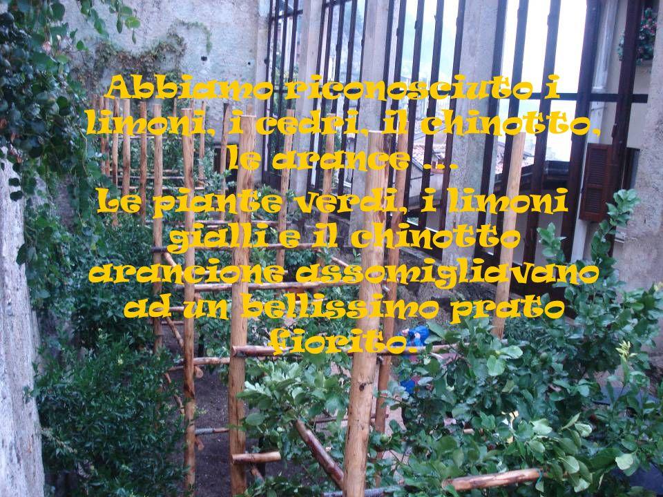 Abbiamo riconosciuto i limoni, i cedri, il chinotto, le arance... Le piante verdi, i limoni gialli e il chinotto arancione assomigliavano ad un bellis