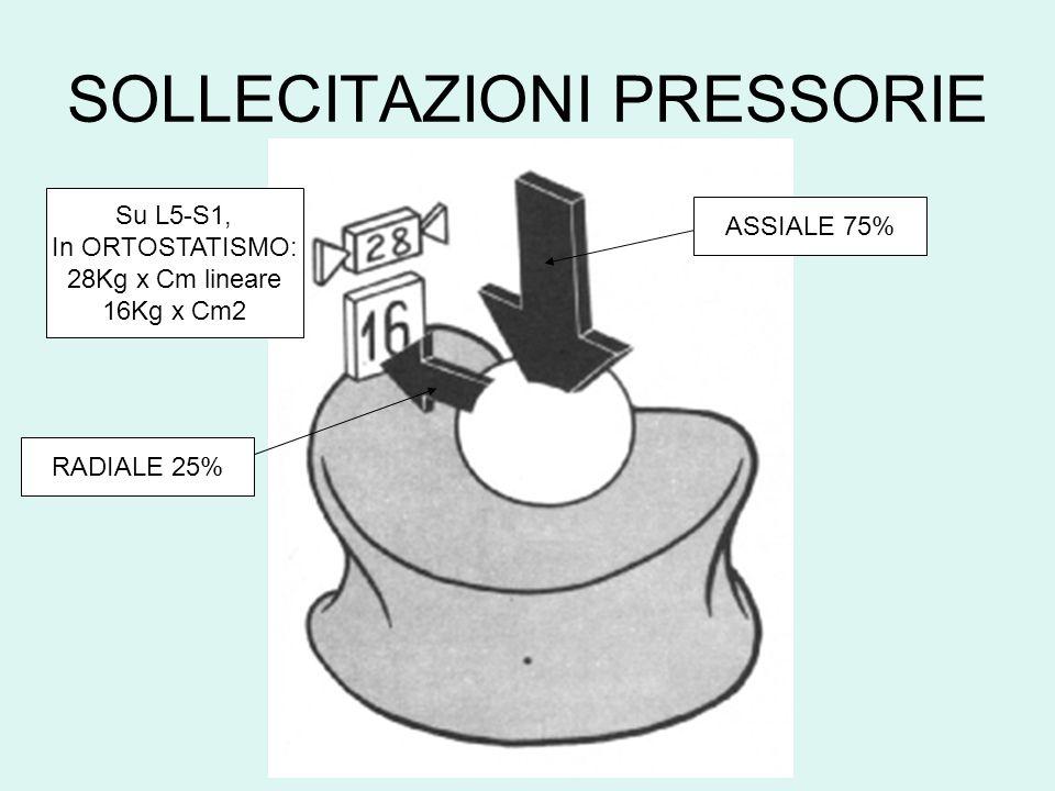 SOLLECITAZIONI PRESSORIE ASSIALE 75% RADIALE 25% Su L5-S1, In ORTOSTATISMO: 28Kg x Cm lineare 16Kg x Cm2