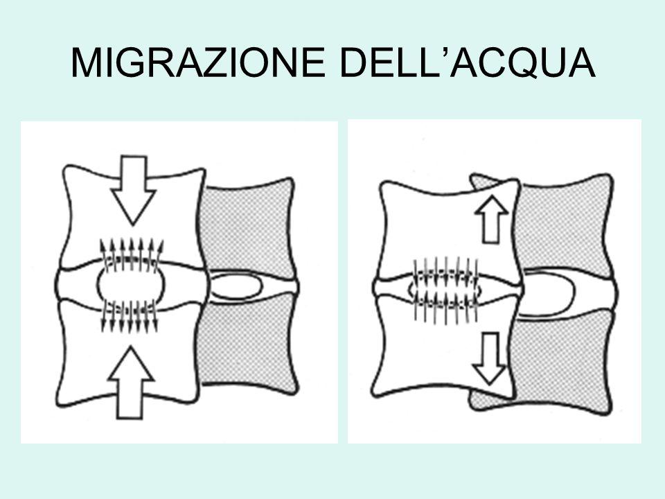 -Ipotonia: flessori del rachide, estensori della coscia -Retrazione: estensori del rachide, flessori della coscia -Rotazione delle pelvi in avanti -Avvicinamento delle ali iliache -Riduzione dellangolo lombo-sacrale -Aumento dellangolo sacrale IPERLORDOSI SQUILIBRIO MUSCOLARE ATTEGGIAMENTO IN NUTAZIONE -Slittamento anteriore del nucleo polposo -Trazione del leg.
