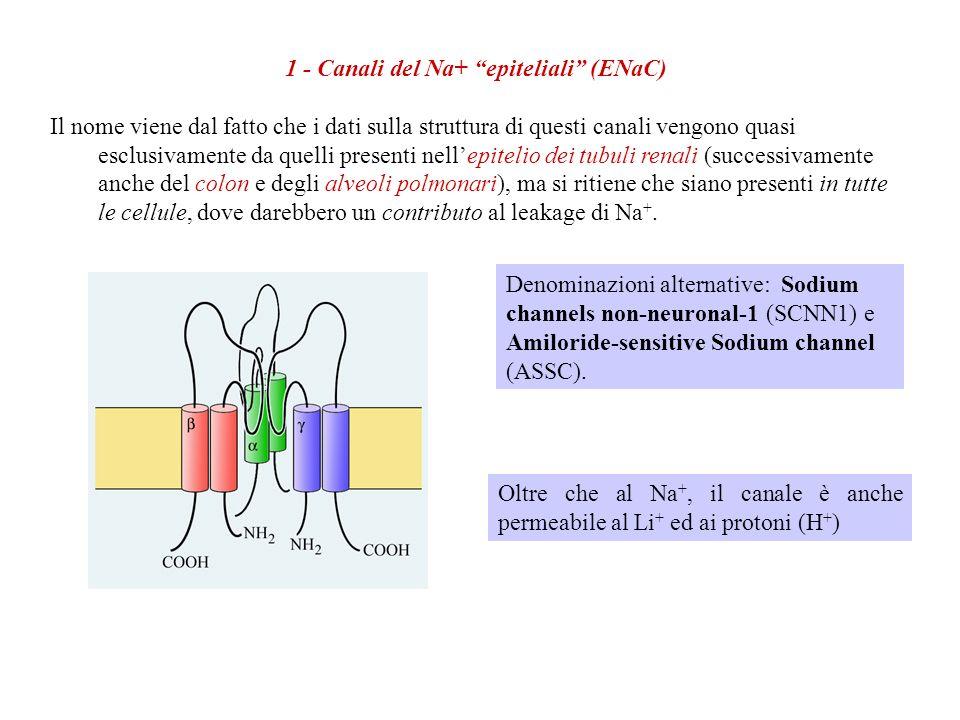 Oltre ad essere fondamentali nel generare il potenziale di membrana a riposo, i canali di leakage hanno un importante finalismo: limitare i gradienti