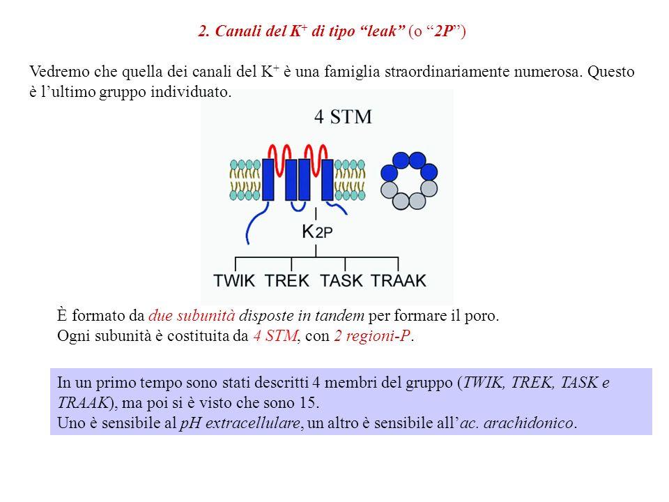 Sono insensibili alla TTX Sono sensibili allamiloride, che viene impiegata in Medicina come diuretico. Importanti per il riassorbimento dellacqua nel
