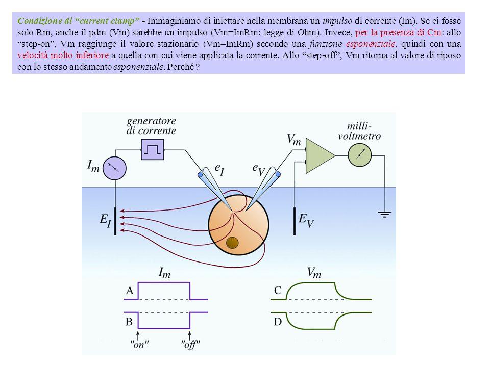 Comportandosi la membrana come un condensatore, in seguito ad uno stimolo elettrico il potenziale di membrana V m non cambia istantaneamente ma impieg