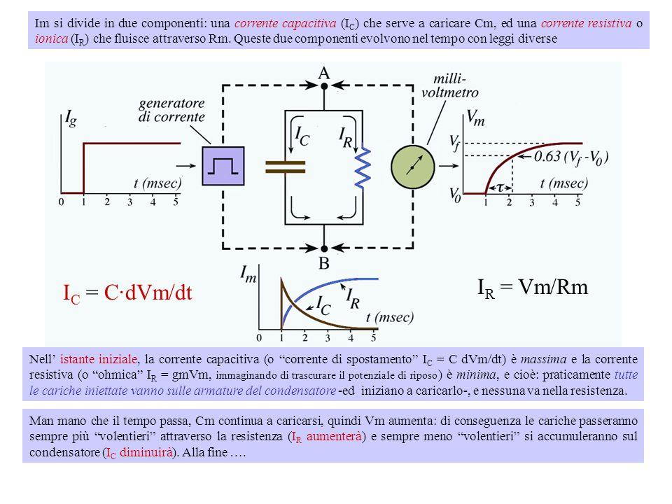 Condizione di current clamp - Immaginiamo di iniettare nella membrana un impulso di corrente (Im). Se ci fosse solo Rm, anche il pdm (Vm) sarebbe un i