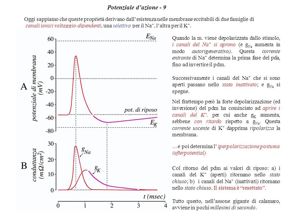 In termini matematici: la risoluzione della semplice equazione differenziale: Im = I C + I R = C dVm/dt + Vm/Rm ci assicura che Vm varierà con legge e