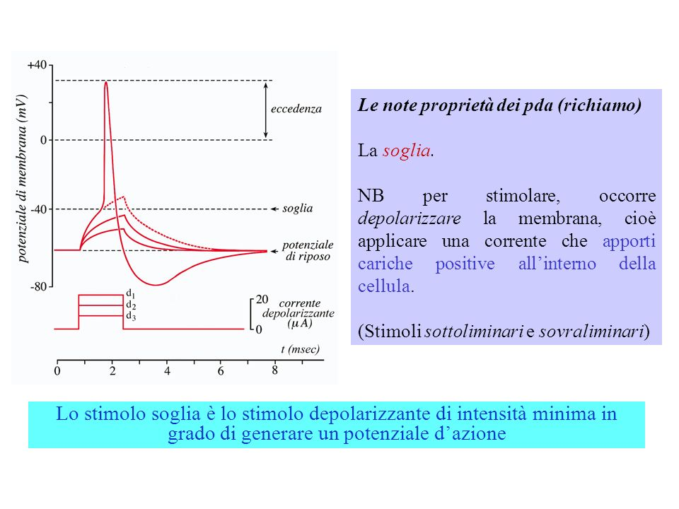 Simulazioni con NeuroLab (time constants) http://www.cudos.ac.uk/web/neurolab/exhibits.htm Nota: Current; R1=max, R2=max, C=var
