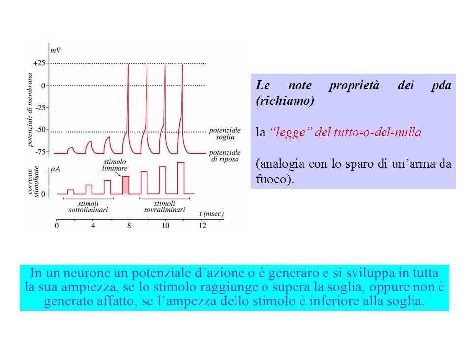 Le note proprietà dei pda (richiamo) La soglia. NB per stimolare, occorre depolarizzare la membrana, cioè applicare una corrente che apporti cariche p