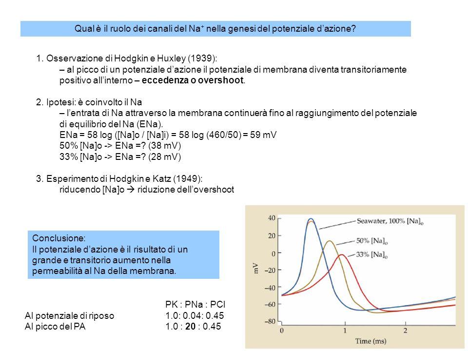 Basi ioniche del potenziale dazione conduttanze e correnti di Na voltaggio-dipendenti conduttanze e correnti di K voltaggio-dipendenti