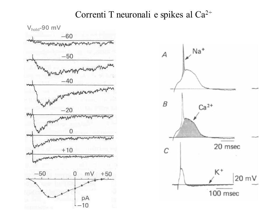 Ruolo dei canali del Ca2+ al di fuori delle zone attive della membrana pre-sinaptica Canali VD per il Ca2+ (solitamente del tipo L) sono anche present