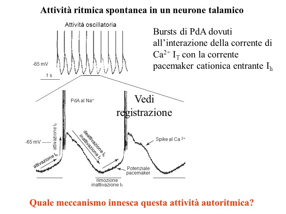Correnti T neuronali e spikes al Ca 2+ V hold -90 mV