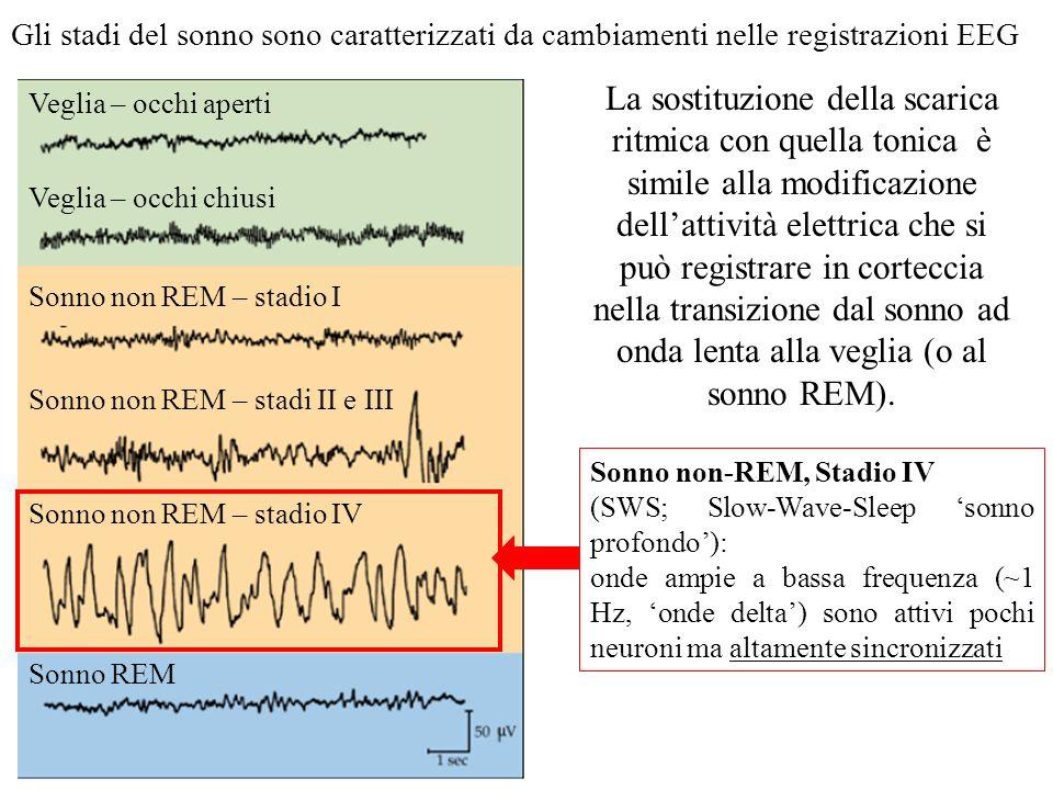 In realtà, i neuroni talamocorticali dei nuclei di relè presentano anche una seconda modalità di scarica (vedi registrazioni) La depolarizzazione di n