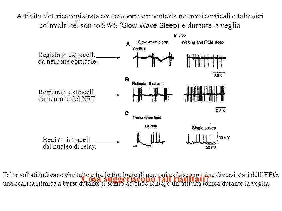 Gli stadi del sonno sono caratterizzati da cambiamenti nelle registrazioni EEG Veglia – occhi aperti Veglia – occhi chiusi Sonno non REM – stadio I So