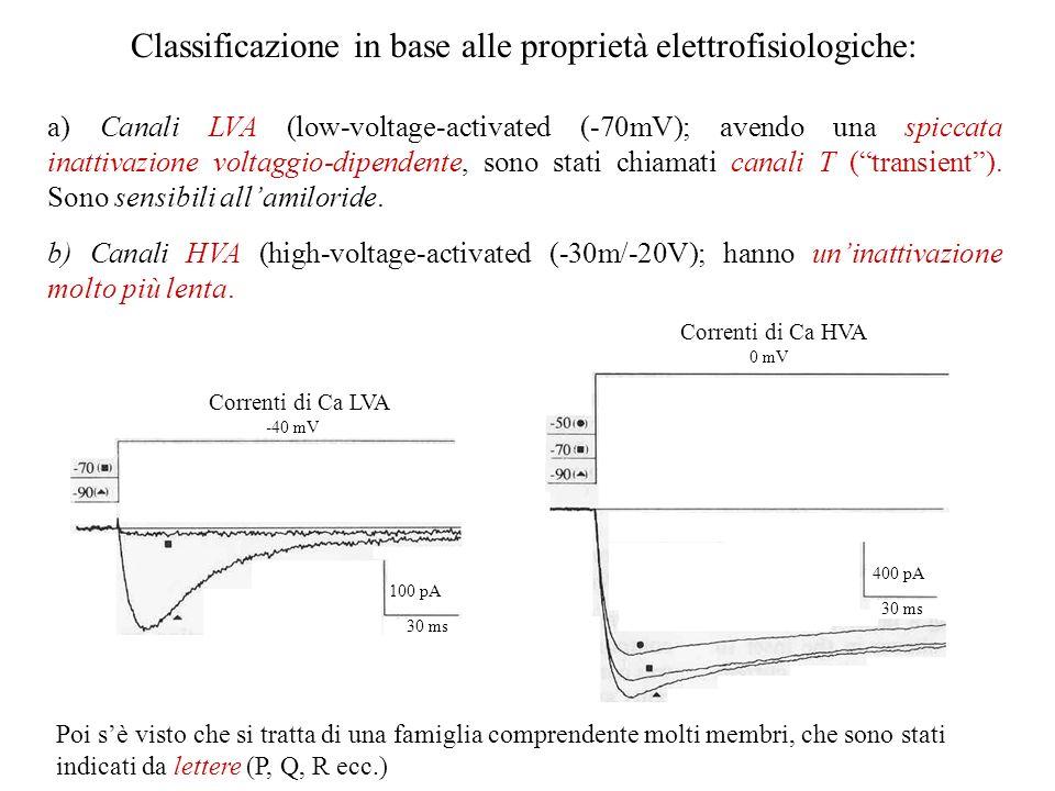 Classificazione in base alle proprietà elettrofisiologiche: a) Canali LVA (low-voltage-activated (-70mV); avendo una spiccata inattivazione voltaggio-dipendente, sono stati chiamati canali T (transient).