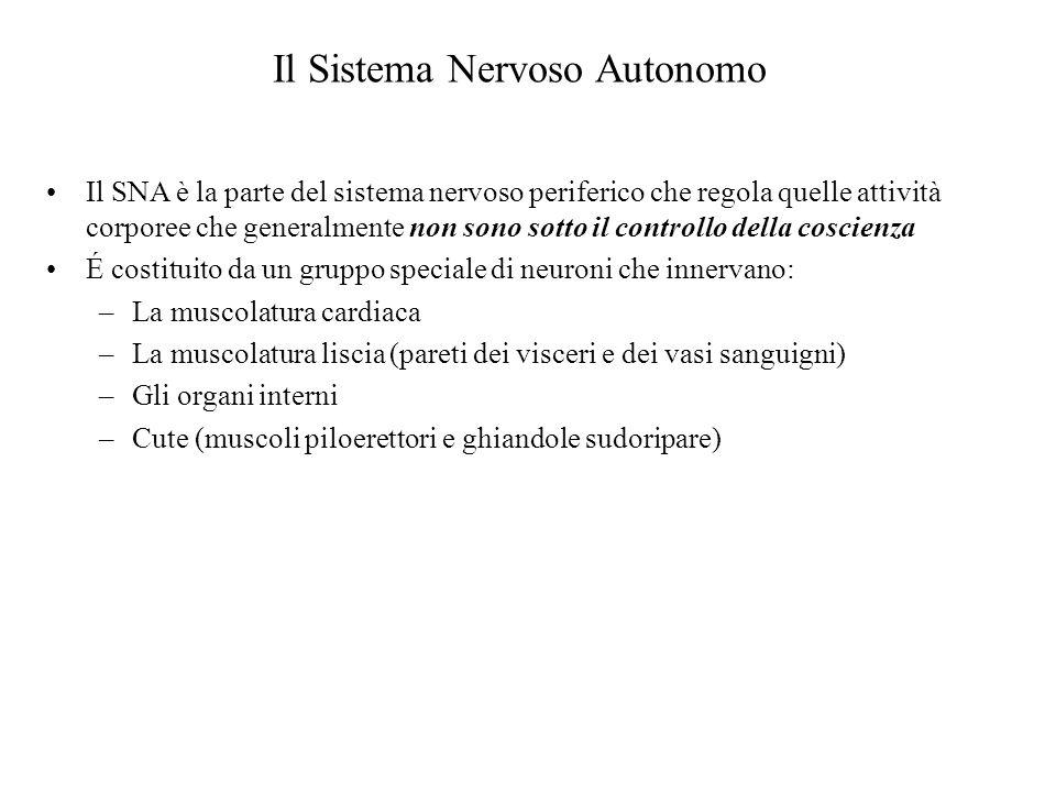 Il SNA è la parte del sistema nervoso periferico che regola quelle attività corporee che generalmente non sono sotto il controllo della coscienza É co