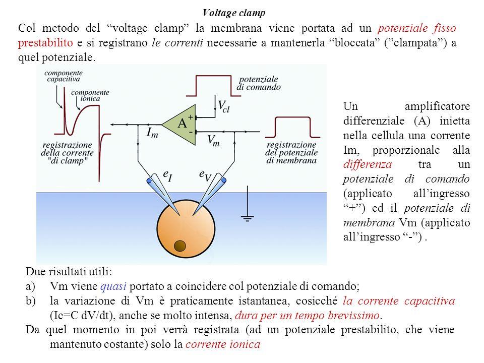 Voltage clamp Col metodo del voltage clamp la membrana viene portata ad un potenziale fisso prestabilito e si registrano le correnti necessarie a mantenerla bloccata (clampata) a quel potenziale.