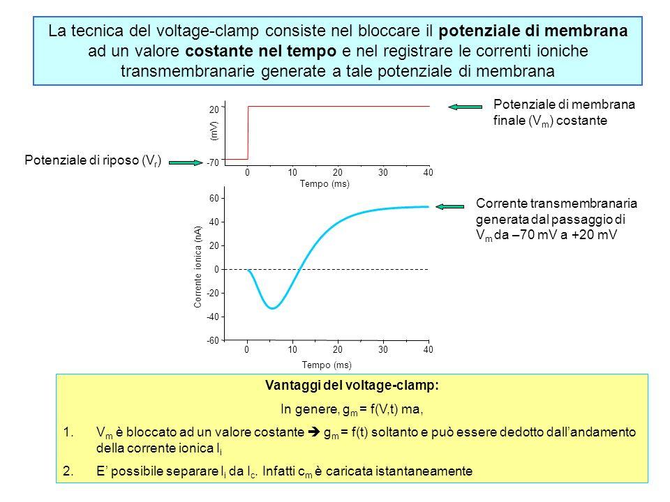 010203040 -70 20 (mV) Tempo (ms) 010203040 -60 -40 -20 0 20 40 60 Corrente ionica (nA) Tempo (ms) La tecnica del voltage-clamp consiste nel bloccare il potenziale di membrana ad un valore costante nel tempo e nel registrare le correnti ioniche transmembranarie generate a tale potenziale di membrana Potenziale di riposo (V r ) Potenziale di membrana finale (V m ) costante Corrente transmembranaria generata dal passaggio di V m da –70 mV a +20 mV Vantaggi del voltage-clamp: In genere, g m = f(V,t) ma, 1.V m è bloccato ad un valore costante g m = f(t) soltanto e può essere dedotto dallandamento della corrente ionica I i 2.E possibile separare I i da I c.