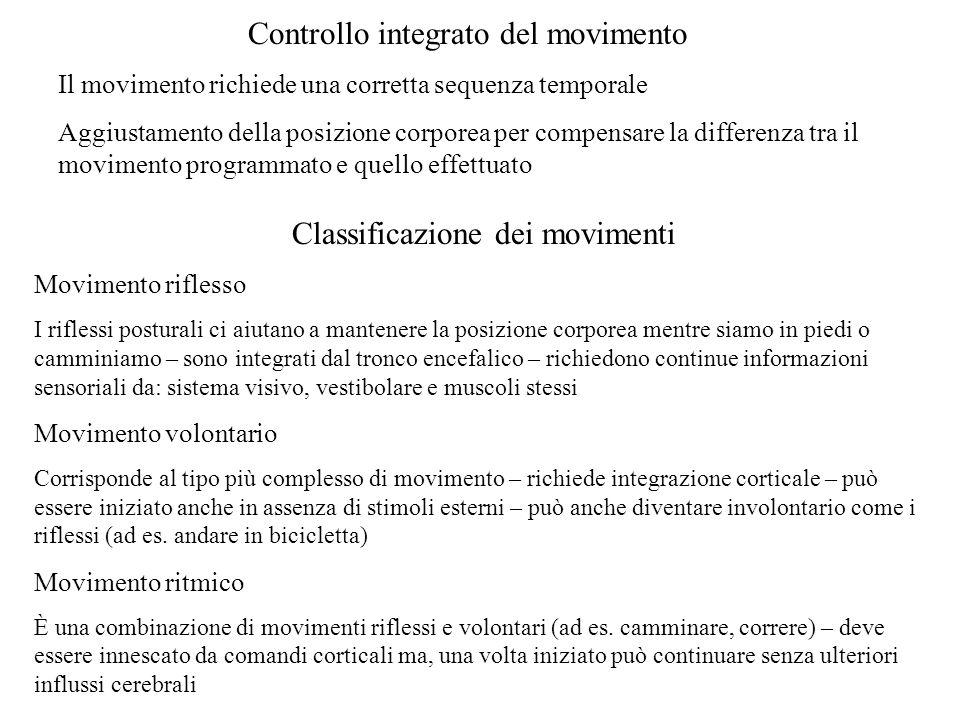 Controllo integrato del movimento Il movimento richiede una corretta sequenza temporale Aggiustamento della posizione corporea per compensare la diffe