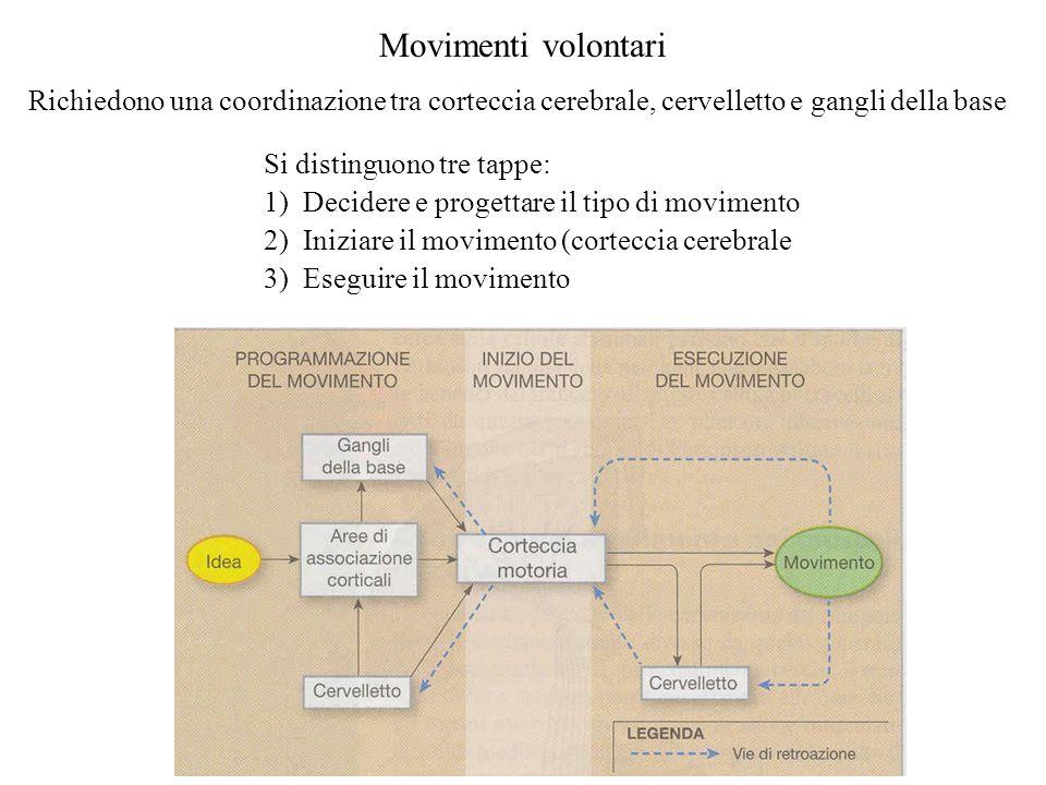 Movimenti volontari Richiedono una coordinazione tra corteccia cerebrale, cervelletto e gangli della base Si distinguono tre tappe: 1)Decidere e proge