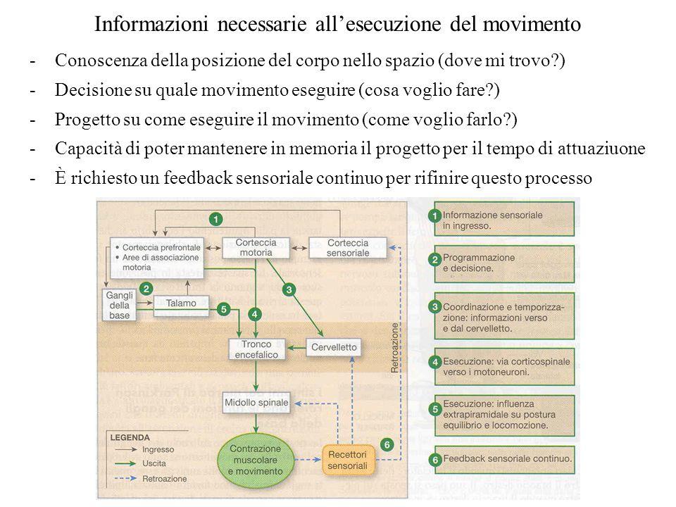 Informazioni necessarie allesecuzione del movimento -Conoscenza della posizione del corpo nello spazio (dove mi trovo?) -Decisione su quale movimento