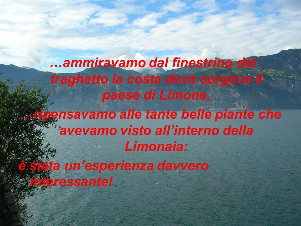 …ammiravamo dal finestrino del traghetto la costa dove sorgeva il paese di Limone, …ripensavamo alle tante belle piante che avevamo visto allinterno della Limonaia: è stata unesperienza davvero interessante!