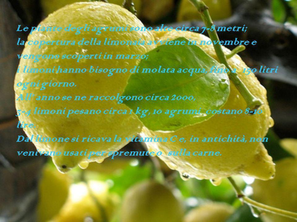 Le piante degli agrumi sono alte circa 7-8 metri; la copertura della limonaia avviene in novembre e vengono scoperti in marzo; i limoni hanno bisogno di molata acqua, fino a 150 litri ogni giorno.