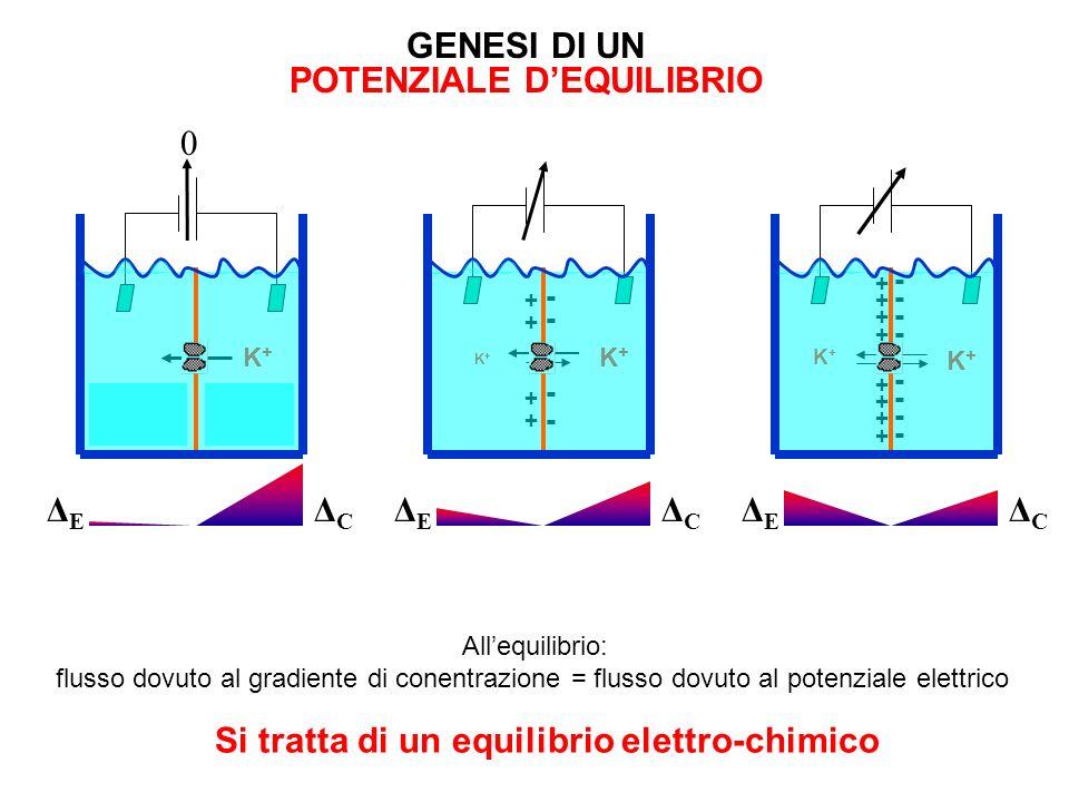 Forze agenti sugli ioni Gradiente di Concentrazione Campo Elettrico Energia chimica è lenergia contenuta in un gradiente di concentrazione Energia ele