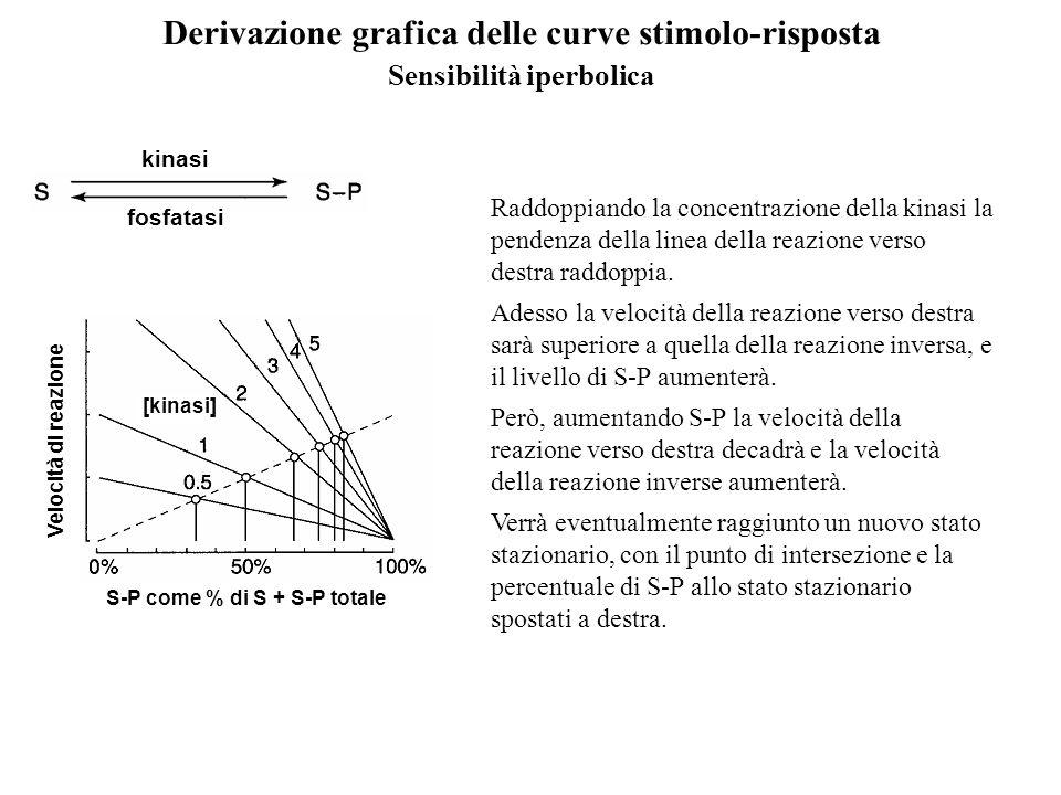 Derivazione grafica delle curve stimolo-risposta Sensibilità iperbolica [kinasi] Velocità di reazione S-P come % di S + S-P totale kinasi fosfatasi Ra