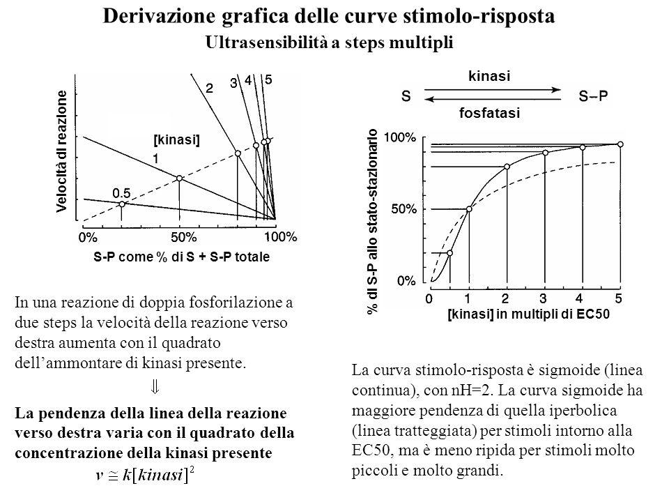 Derivazione grafica delle curve stimolo-risposta Ultrasensibilità a steps multipli kinasi fosfatasi La curva stimolo-risposta è sigmoide (linea contin