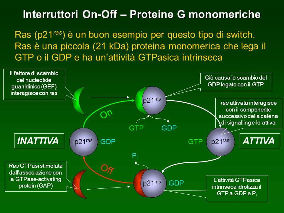 Interruttori On-Off – Proteine G monomeriche Ras (p21 ras ) è un buon esempio per questo tipo di switch.