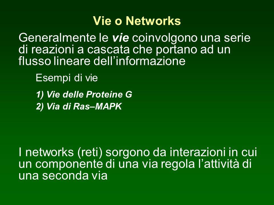 Vie o Networks Generalmente le vie coinvolgono una serie di reazioni a cascata che portano ad un flusso lineare dellinformazione Esempi di vie 1) Vie