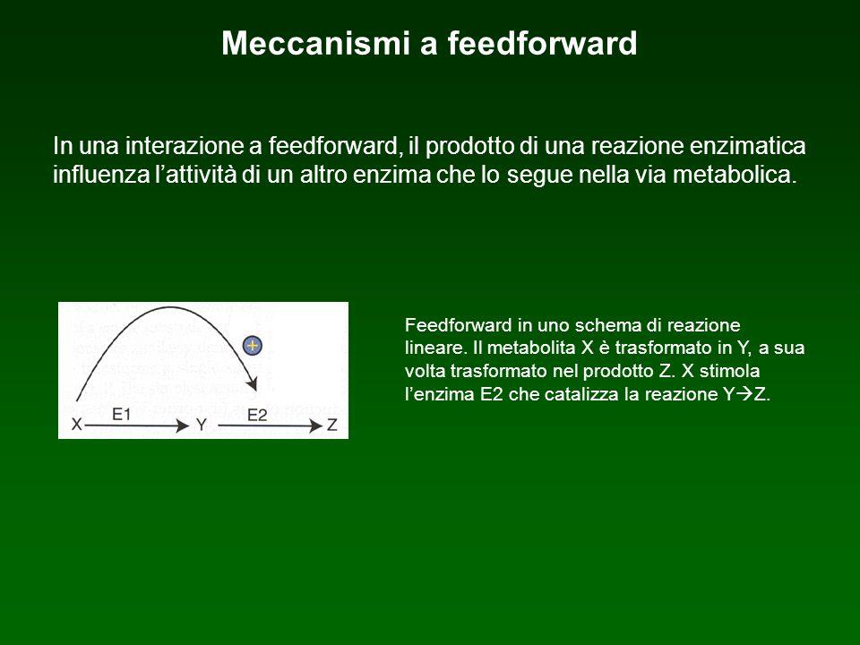 Feedforward in uno schema di reazione lineare. Il metabolita X è trasformato in Y, a sua volta trasformato nel prodotto Z. X stimola lenzima E2 che ca