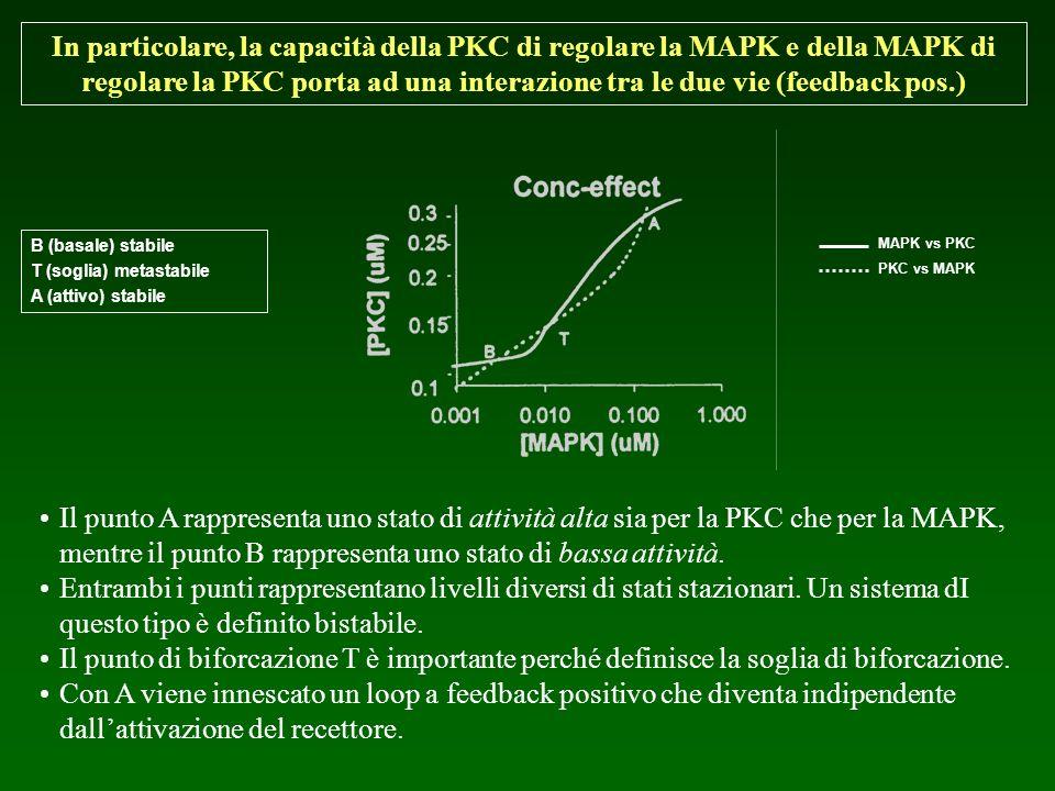 B (basale) stabile T (soglia) metastabile A (attivo) stabile MAPK vs PKC PKC vs MAPK Il punto A rappresenta uno stato di attività alta sia per la PKC