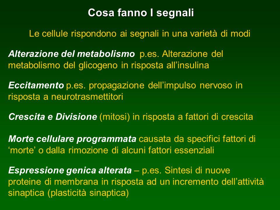 Cosa fanno I segnali Le cellule rispondono ai segnali in una varietà di modi Alterazione del metabolismo p.es. Alterazione del metabolismo del glicoge