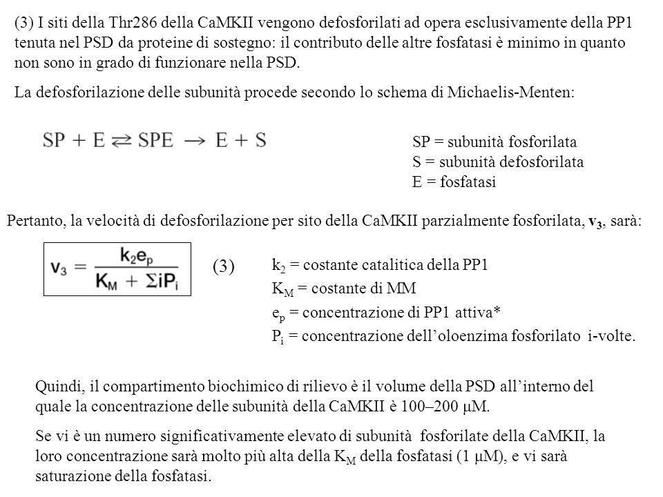 Quindi, il compartimento biochimico di rilievo è il volume della PSD allinterno del quale la concentrazione delle subunità della CaMKII è 100–200 μM.