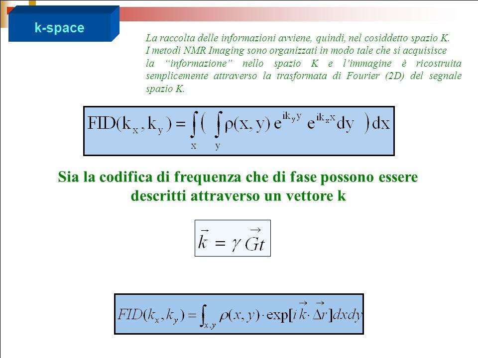 k-space Sia la codifica di frequenza che di fase possono essere descritti attraverso un vettore k La raccolta delle informazioni avviene, quindi, nel