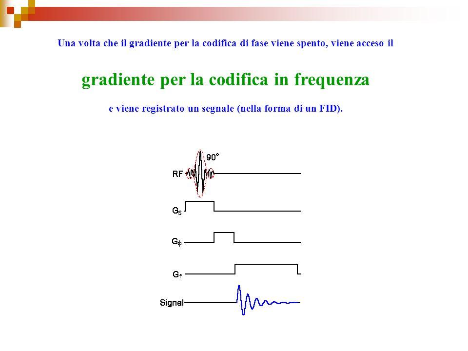 Una volta che il gradiente per la codifica di fase viene spento, viene acceso il gradiente per la codifica in frequenza e viene registrato un segnale